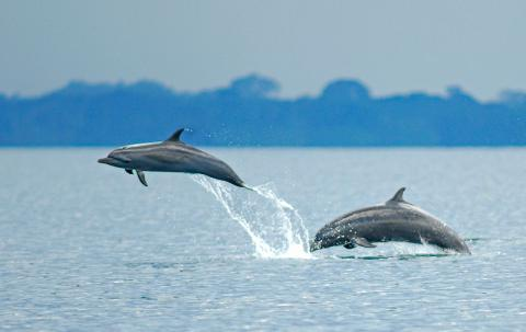 Dolphins in Golfo Dulce, Costa Rica